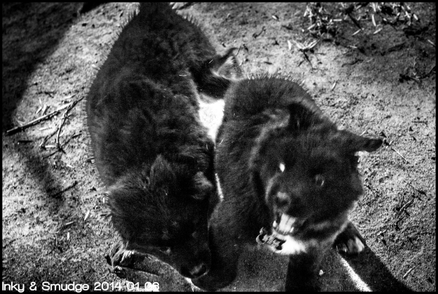 Inky & Smudge 1 BW
