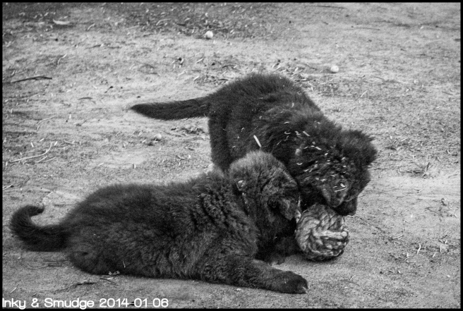 Inky & Smudge 2 BW