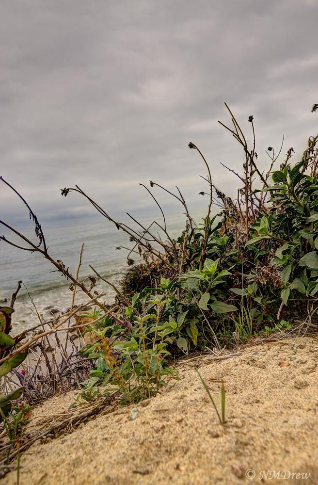 Beach Plants Above El Matador