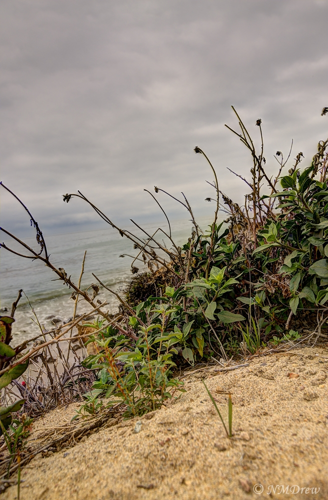 Beach Plants Above El Matador