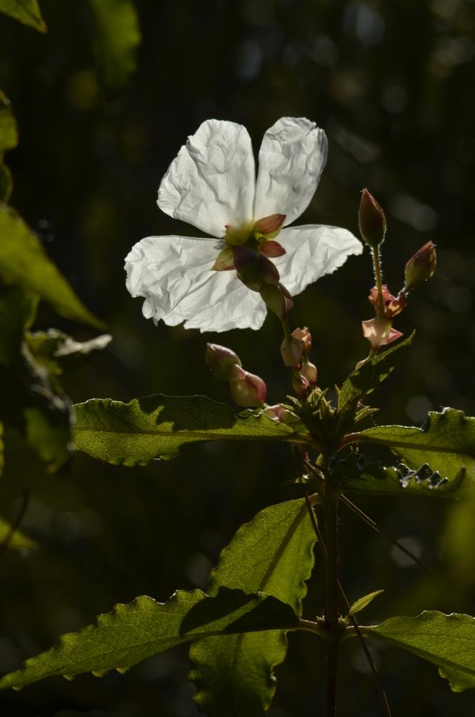 Morning Flower, Color
