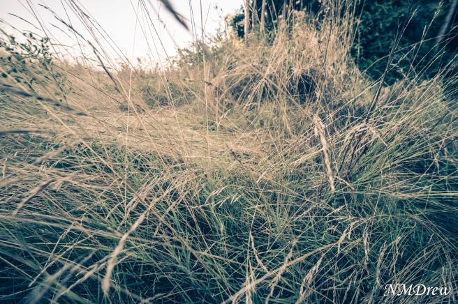 Beach Grass 2