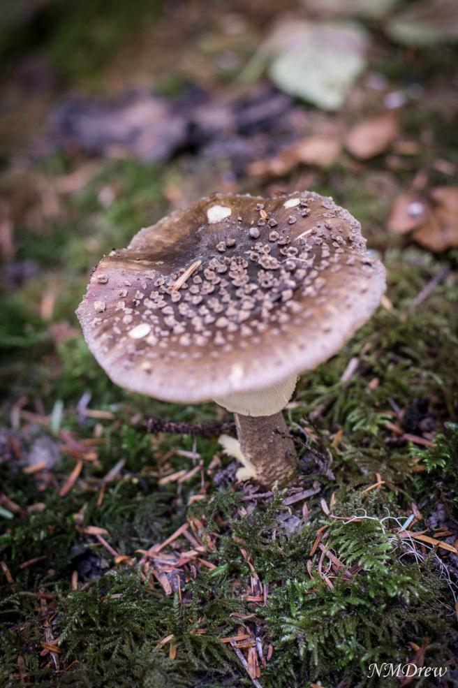 Mushroom-2