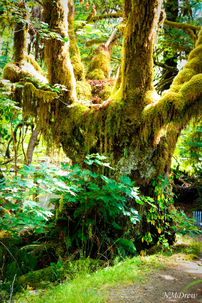 Old Tree and Moss