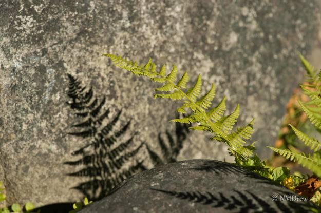 Fern Leaf  - Original