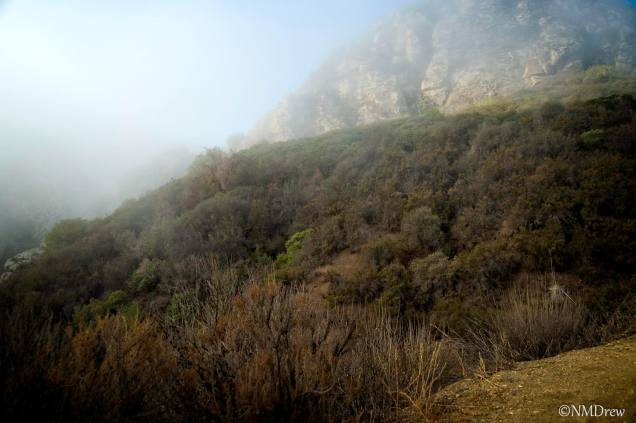 In the Santa Monica Mountains