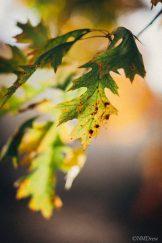 Autumn (1 of 10)