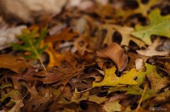 Autumn (10 of 10)
