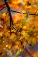 Autumn (2 of 10)