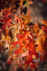 Autumn (3 of 10)