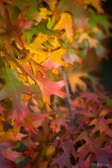 Autumn (4 of 10)
