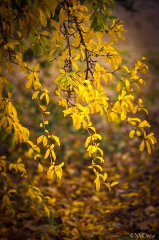 Autumn (5 of 10)