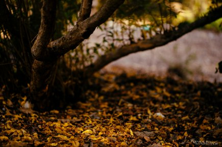 Autumn (6 of 10)