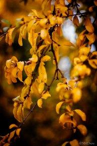 Autumn (7 of 10)