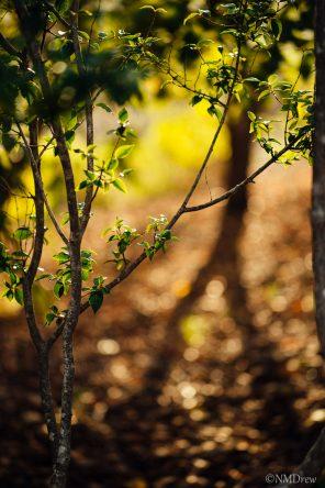 Autumn (8 of 10)