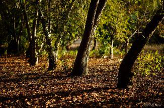 Autumn (9 of 10)