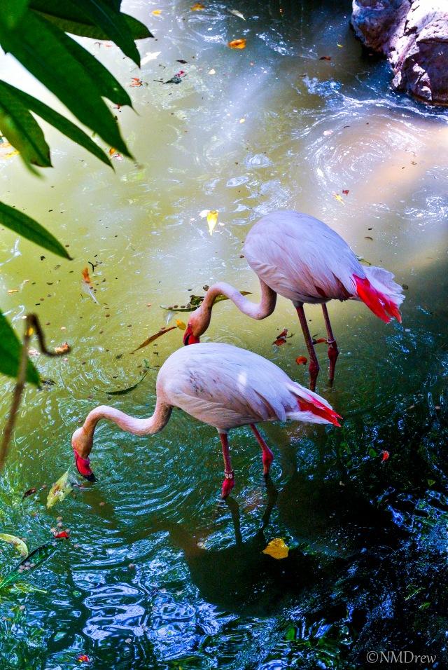 Flamingo Pond Original (1 of 1)