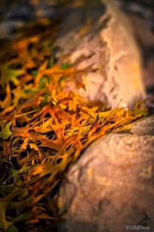 Leaves Between Rocks i (1 of 1)