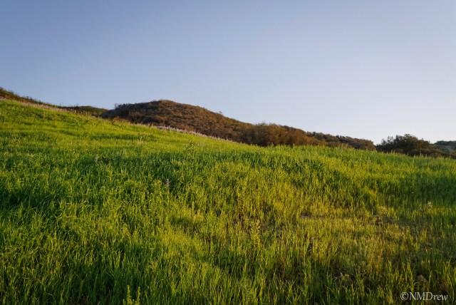 Grassy Hillside-2
