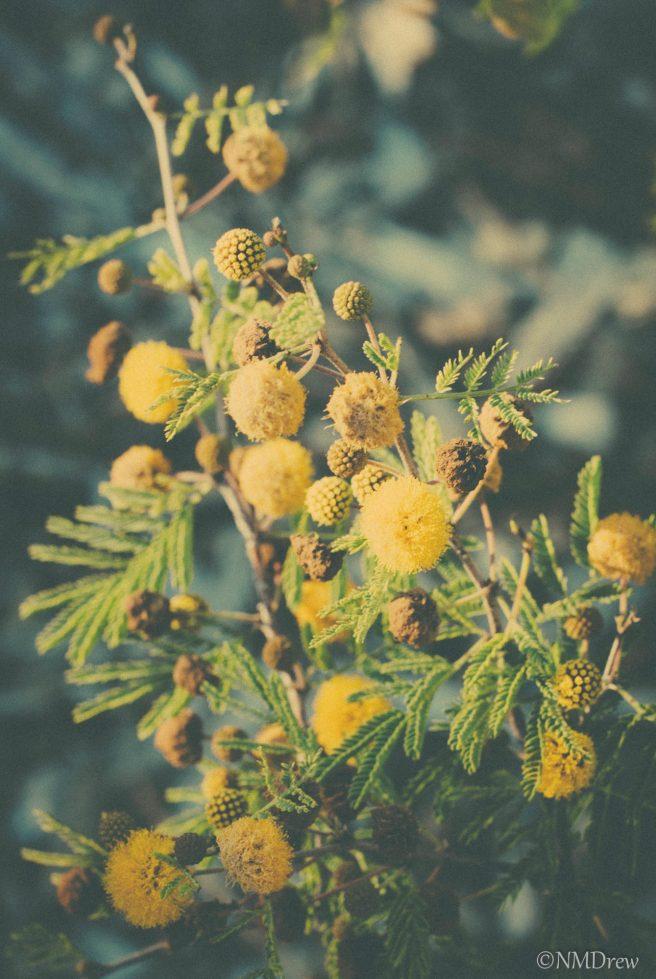 Yellow Buds