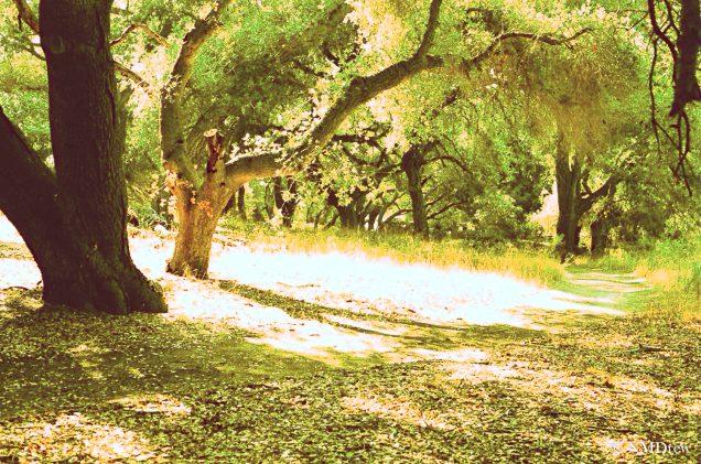 Oaks & Pathway - Sunflower Fields - Topaz Restyle