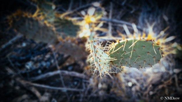 Cactus - Fuji Astia 100F