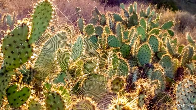 Sunrise Web