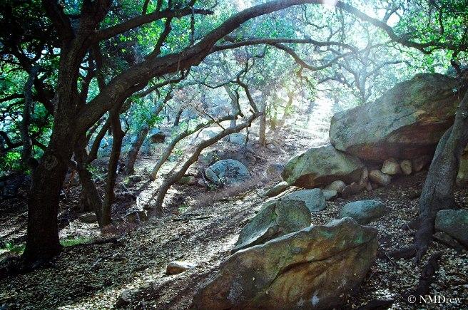 Trees & Rocks-1