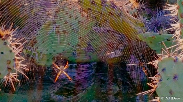 Web Sweet Web