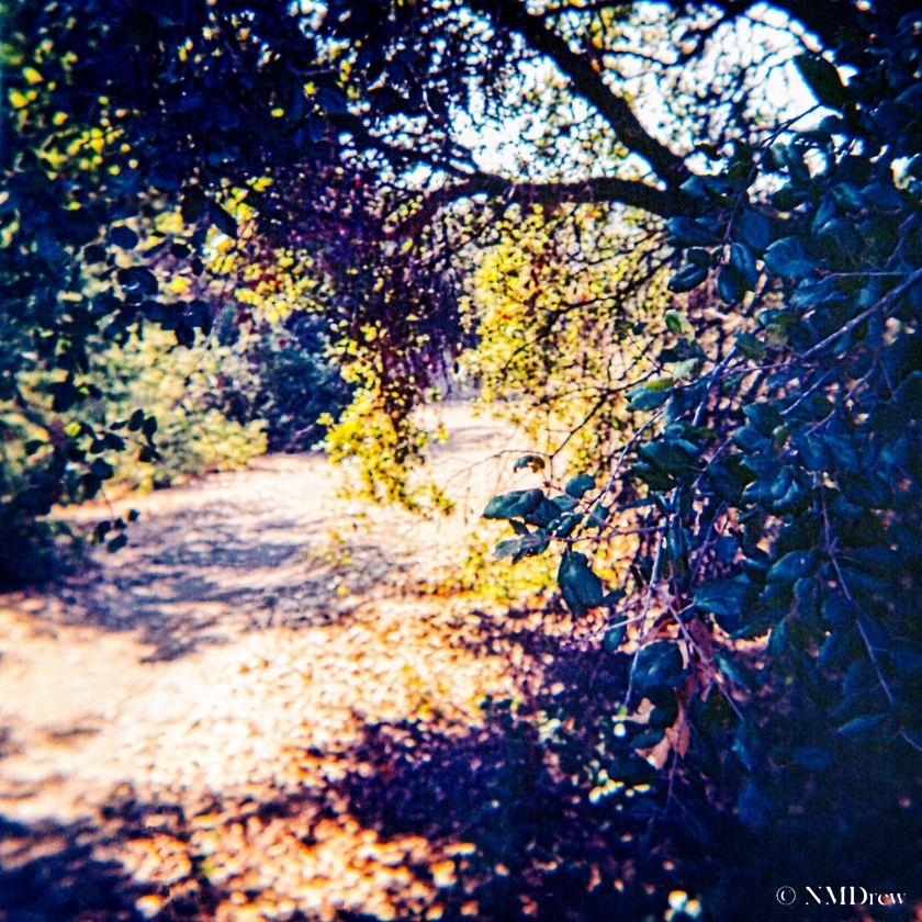 Trail a la Lomo with PS6 Dust Removal