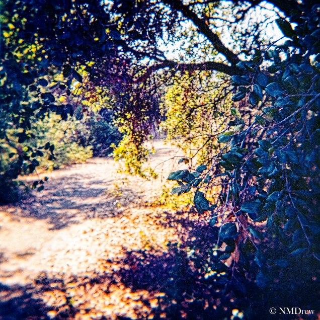 Trail a la Lomo