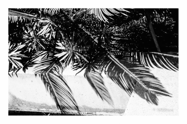 Palm & Shadows