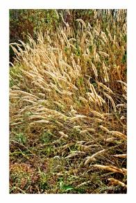 River Grasses in Summer