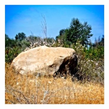 Rock with Buckwheat