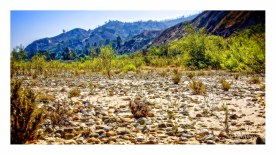 Santa Clara Riverbed in Summer