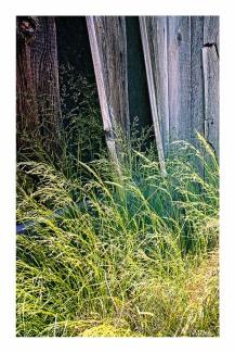 Grasses & Boards