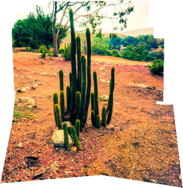 cactus-collage-2