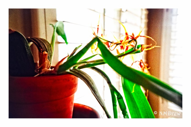 orchid-in-the-window
