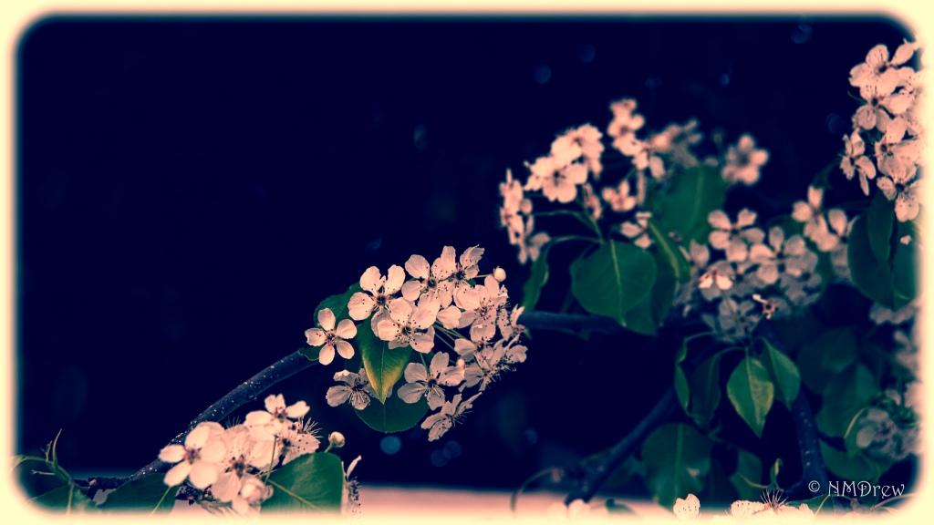 memories-of-last-spring