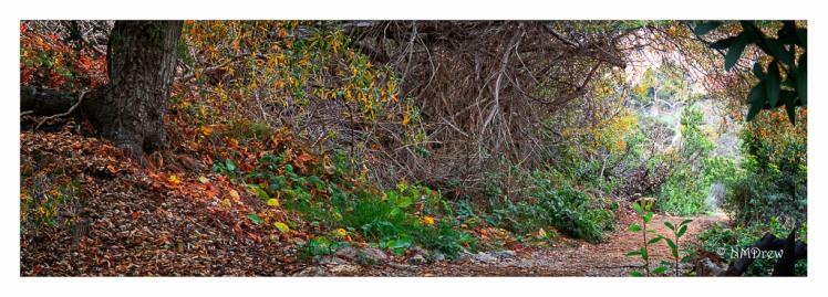 3-365-corner-of-the-world-autumn-rain