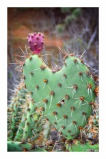 Prickly Love