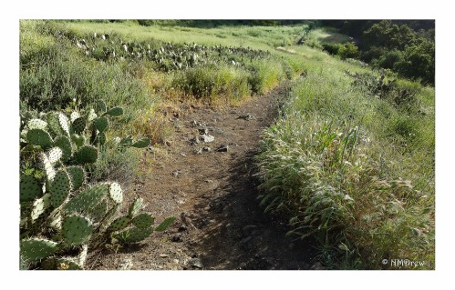 Trail to the Creek