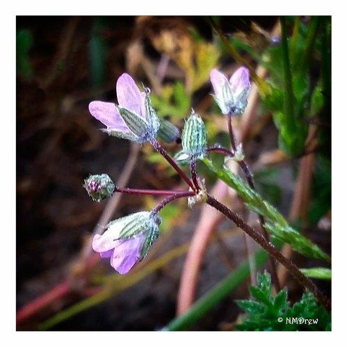 Very Tiny Pink Flowers