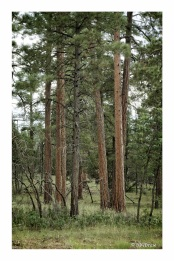 The fire road is relatively flat,, with meadows of pine and flower.