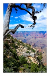 Views of the Grand Canyon (5 of 12)