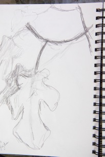 Gestural drawing of a fig tree and leaf