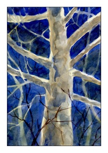 Moonlit Sycamore 1