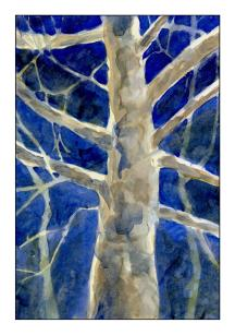 Moonlit Sycamore 1 - Edited