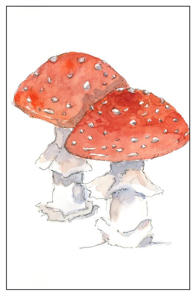 Fly Agaric Mushroom - Study from Claudia Nice (1 of 1)