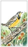 Meadowlark - Inked